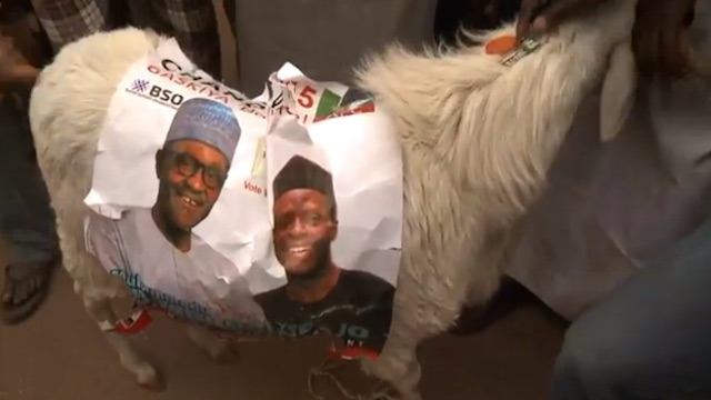 Nigerians Celebrate the Victory of General Buhari